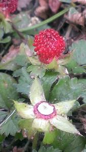 Berry Yard